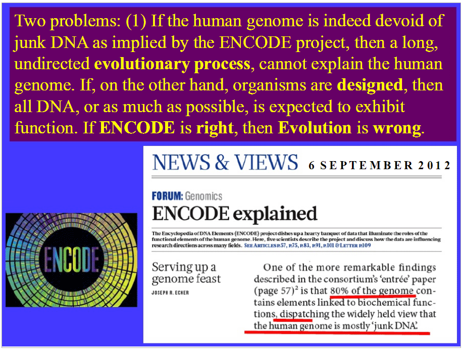 encode project The gencode project produces high quality reference gene annotation and experimental validation for human and mouse genomes.